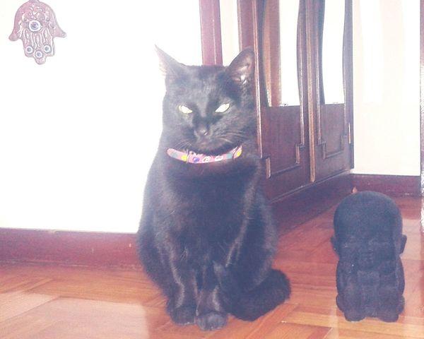 Cat Buddha Buddahcat Hamsa Hand Ohm❤