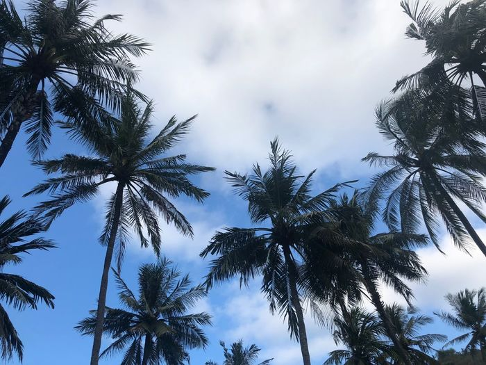 Beauty In Nature Cloud - Sky Coconut Palm Tree Day Directly Below Growth Lombok Low Angle View Nature No People Outdoors Palm Leaf Palm Tree Plant Scenics - Nature Silhouette Sky Tall - High Tranquil Scene Tranquility Travel Destinations Tree Tree Trunk Tropical Climate Tropical Tree