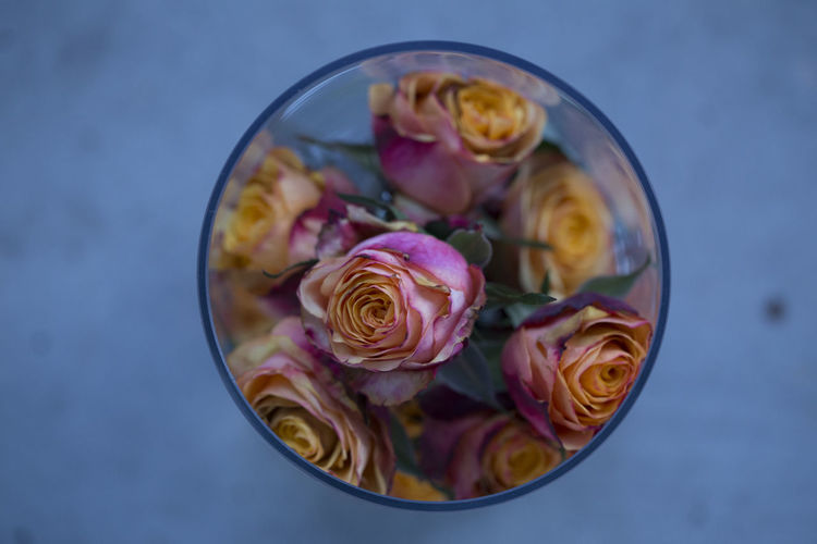 Close-up of roses in glass