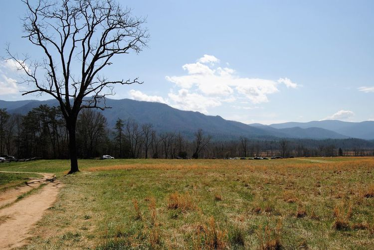 Smokey Mountains Plant Tree Sky Beauty In Nature Landscape Scenics - Nature Environment Cloud - Sky Grass Day Tranquility Land Growth Nature Field Mountain Range Non-urban Scene Mountain Tranquil Scene Idyllic Summer Exploratorium