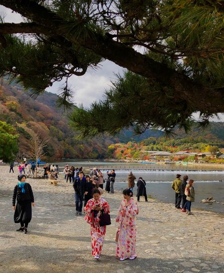Arashiyama Tree Branches River Dam Colorful Autum Trees Kimono Girl Women City Life ASIA Asiatic People Japanese People Large Group Of People Tree Women Real People Men Lifestyles Day Ceremony Outdoors People Adult Nature Adults Only Sky