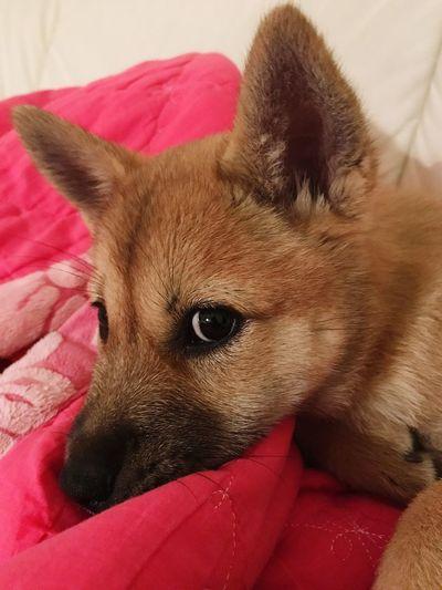 Dogstagram Doglife Lovely Dog Dog Pose Dog Portrait