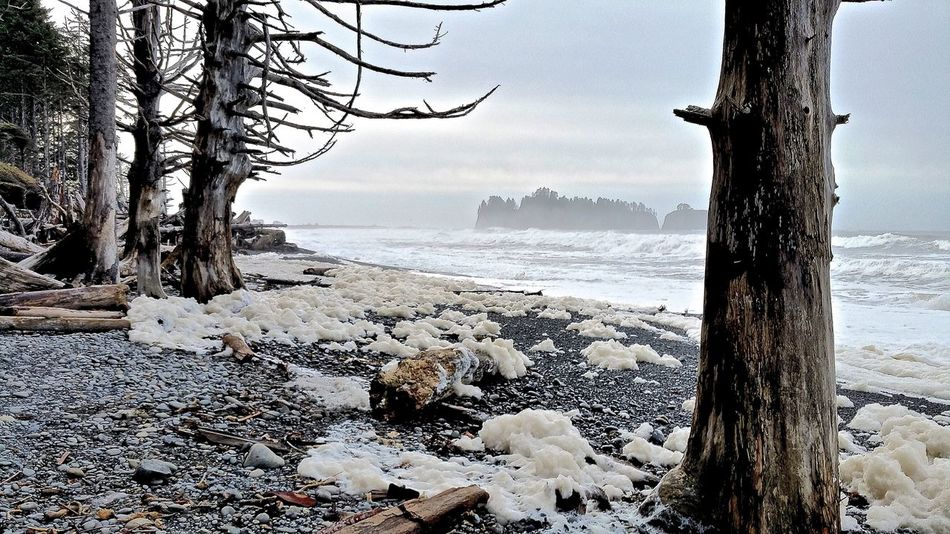 Rialtobeach Olympic National Park Wilderness Wild Nature Beautiful Nature Beautiful View Beatiful Place Nature_collection On The Beach Nature_perfection How Do You See Climate Change?