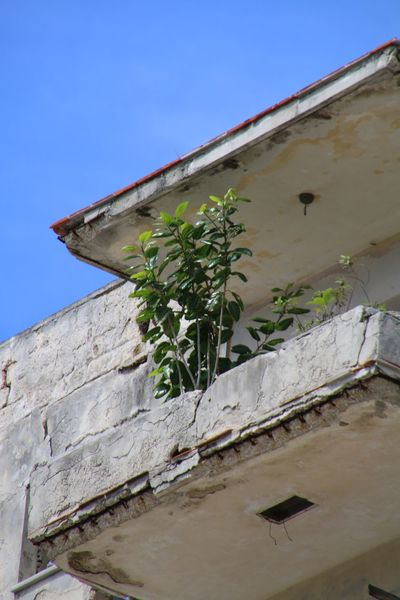 Architectural Feature Architecture Blue Building Exterior Built Structure Clear Sky Day Fragility Growth House Low Angle View No People Outdoors Plant Sky Stone Material Wall - Building Feature Weathered