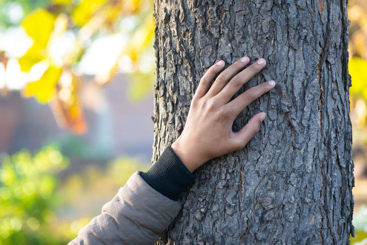 Close-up of woman hand on tree trunk