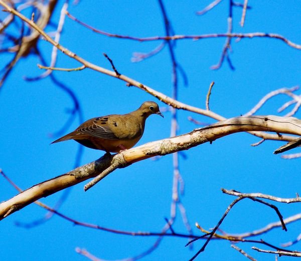 Bird Blue Branch Perching Animals In The Wild Animal Wildlife Tree Animal Themes One Animal No People Outdoors Beauty In Nature Sky Close-up Nature