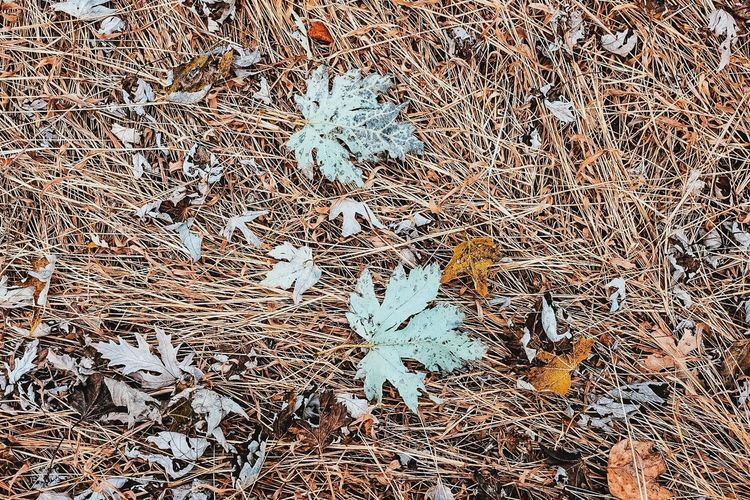 Abundance Autumn Change Close Up Day Dry Fallen Full Frame Geometry Ground Growing Hay High Angle View Leaf Nature No People Outdoors Texture