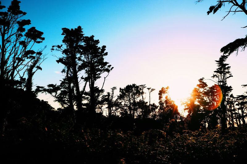Tree Silhouette Sunset Nature Beauty In Nature Growth Scenics Tranquil Scene Sunlight Tranquility Sun Outdoors Sky Forest Landscape Tree Area Branch Clear Sky Day