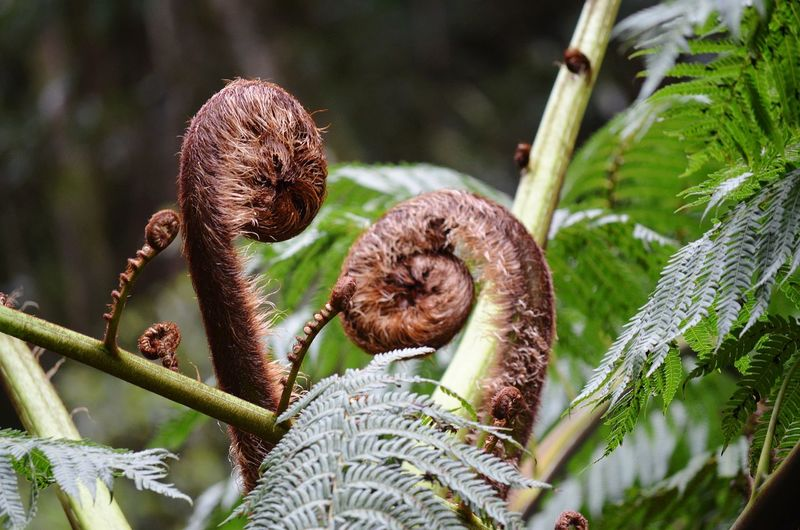 Feto Plant Plant Life Plant Part Fern Tree Fern Close-up Plant Plant Life Blooming Growing Stem Bud