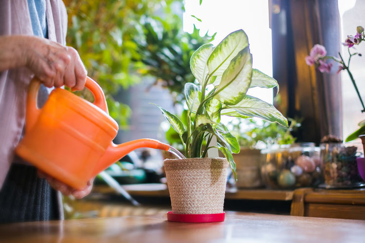 Close-up of woman holding glass of potted plant