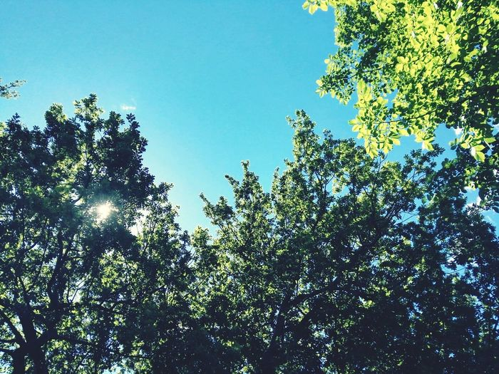 Colors Natural Simplicity Nature Photography Beautiful Nature The Simplicity Of Beauty Trees And Sky Look Up Blusky EyeEm Nature Lover Nature_collection
