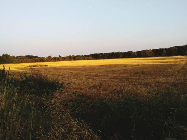 Rural Scene Tree Agriculture Field Cereal Plant Sky Landscape