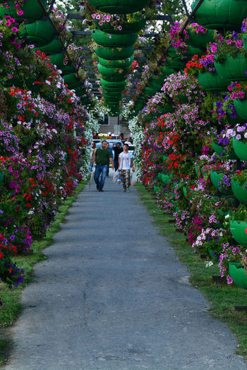 Adult Beauty In Nature Couple - Relationship Day Diminishing Perspective Direction Flower Flowering Plant Flowers Footpath Full Length Group Of People Growth Lifestyles Men Nature Outdoors People Plant Real People Sakarya Sakarya Kent Park The Way Forward Tree Women