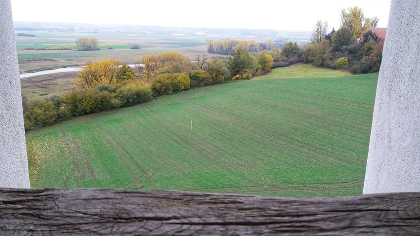 EyeEm EyeEm Selects Man Beautiful Nature Tree Field Rural Scene Agriculture Sky Grass Green Color Landscape Grassland