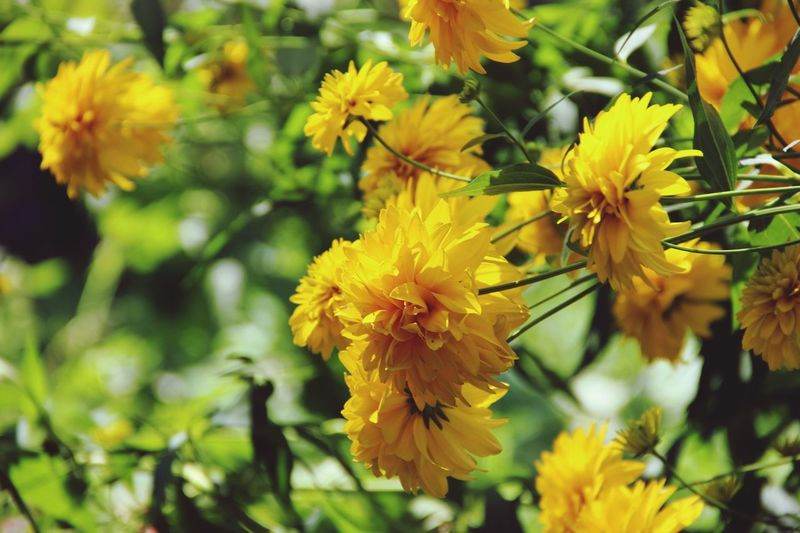 Nature_collection Nature Russia Flower Collection Flower Flowers Ryazan