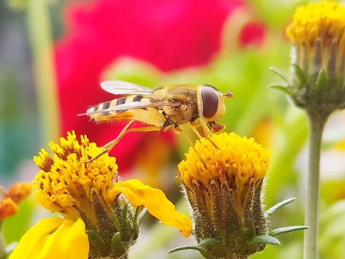Honey Bee EyeEm Selects Flower Insect Animals In The Wild Uncultivated Fragility No People Animal Themes