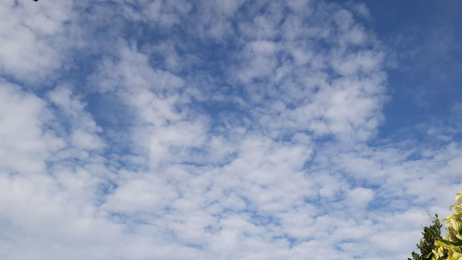 blue sky with cloud Blue Sky With Clouds Blue Sky With Clouds Close-up Blue Sky With Cloud Cloud - Sky Blue Sky Cloudscape Nature No People Backgrounds Day Outdoors Low Angle View Tranquility Beauty In Nature Summer Sky Only