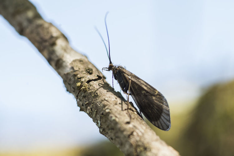 Close-up of butterfly perching on a tree