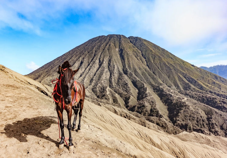 Horse standing on mountain against sky