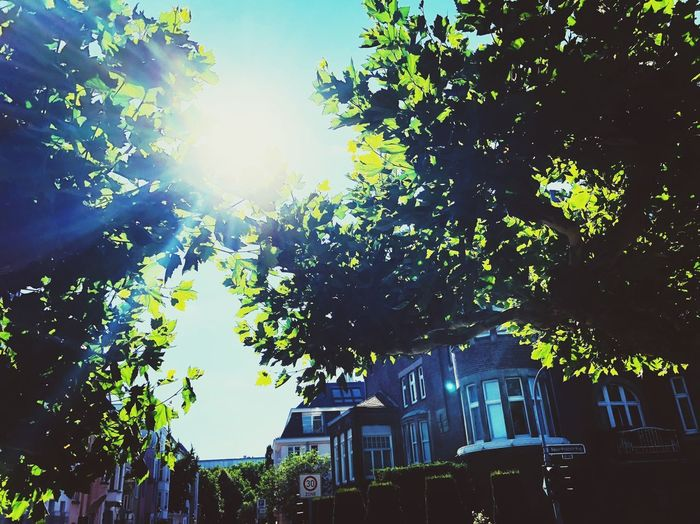 Baum Sonne Plant Tree Low Angle View Sky Nature Architecture Growth Built Structure Outdoors Building Exterior No People Day Plant Part Sunlight City Branch Building Leaf Tranquility Illuminated