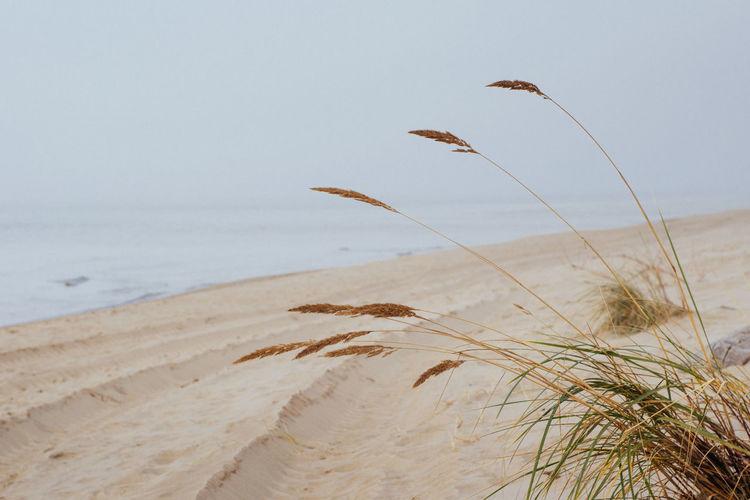 Plant growing on beach against clear sky