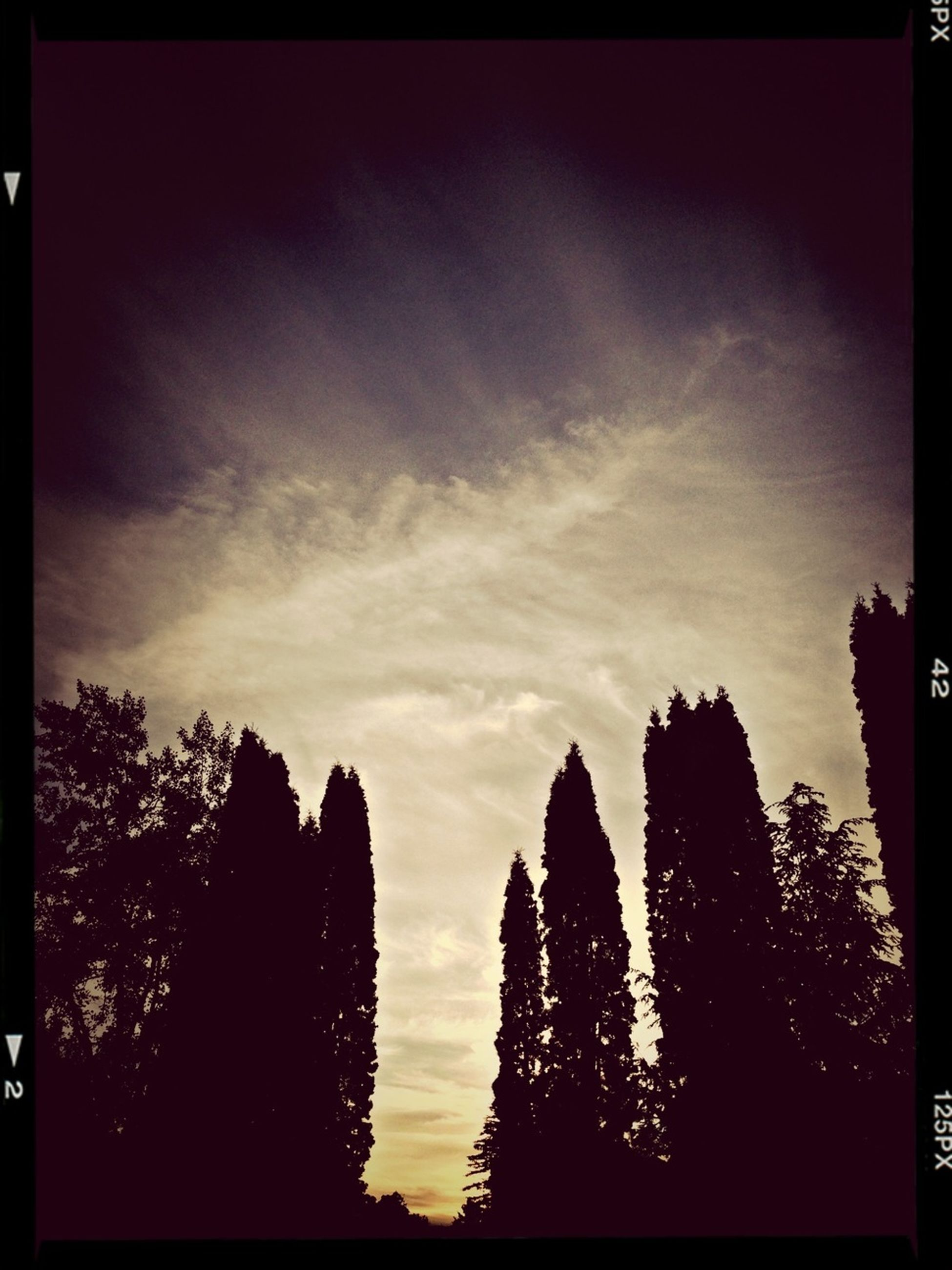 transfer print, silhouette, sunset, sky, auto post production filter, tree, beauty in nature, scenics, tranquility, low angle view, nature, tranquil scene, cloud - sky, cloud, dusk, outdoors, no people, idyllic, outline, sunlight