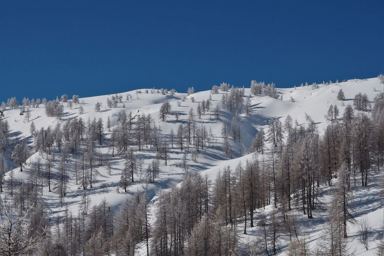 Panoramic view of trees and snowcapped mountains against clear blue sky