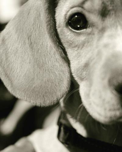 luna half portrait Halfportrait Mixedbreeddog Loyaldog Pets Dog Portrait Close-up