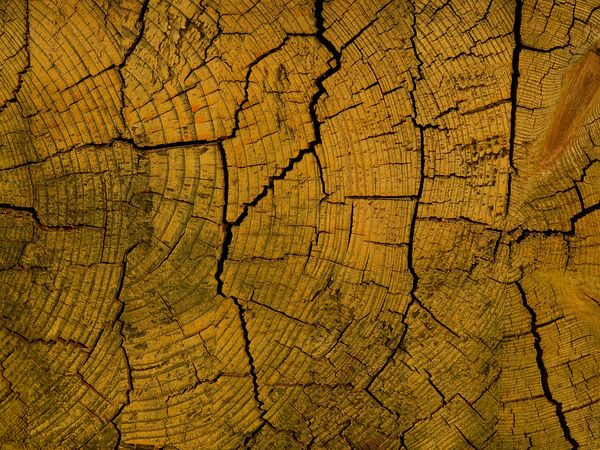 old wood Craquelure Abstract Backgrounds Backgrounds Bark Brown Close-up Concentric Cracked Day Environment Forest Full Frame Natural Pattern Nature No People Outdoors Pattern Rough Textured  Textured Effect Tree Tree Ring Tree Stump Wood - Material Wood Grain