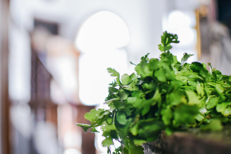 Close-up of cilantro on table