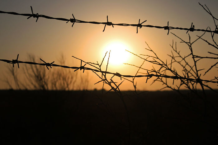 Barbed Wire Beauty In Nature Day Field Metal Nature No People Outdoors Protection Razor Wire Safety Scenics Silhouette Sky Sun Sunset