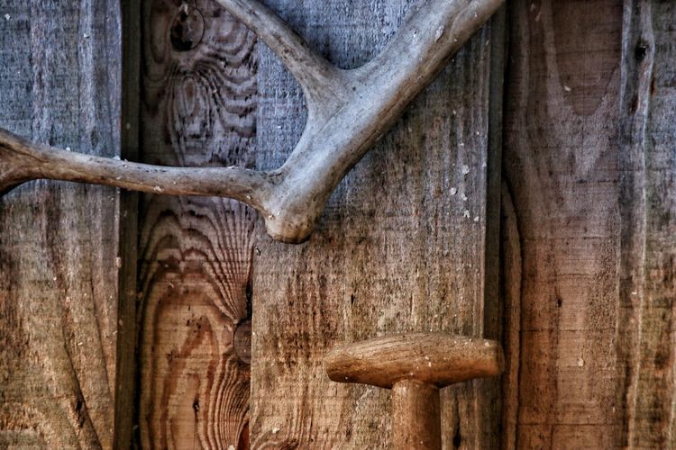 Hunting Lodge Hunting Trophy Weathered Wood Cabin Forrest Cabin Rural Antler Deer Antler Shack Wooden Shack Shed Wood - Material Tree Trunk No People Day Textured  Close-up Tree Nature Outdoors