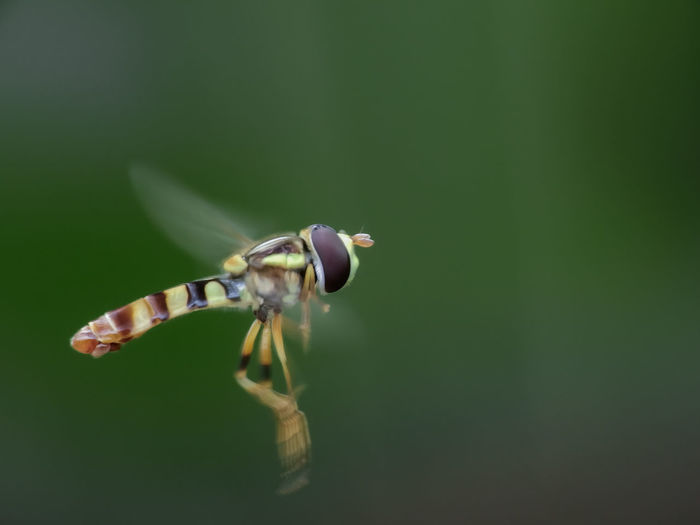 Close-up of insect