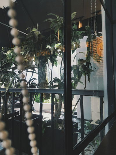 Window Built Structure Tree Plant Glass - Material Growth Architecture Building Exterior Day Houseplant City Life