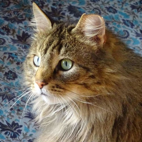 Close-up portrait of cat looking away