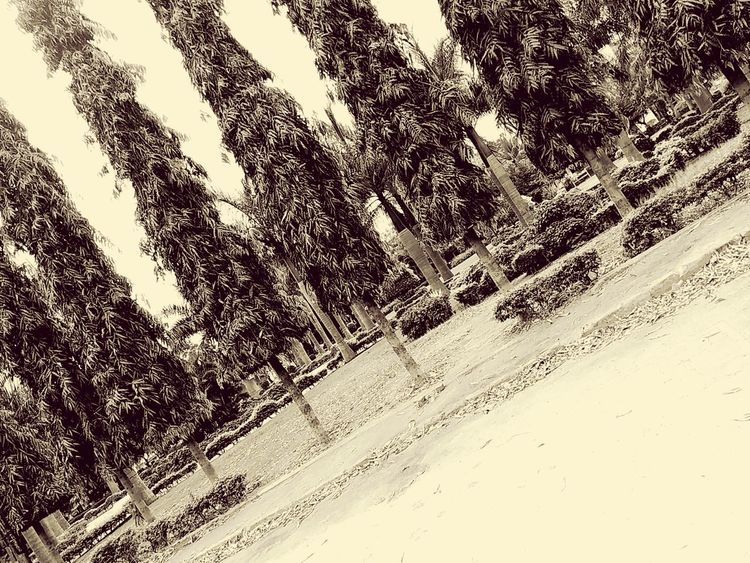 Black And White Photography Trees Beautiful Vintage Vintage Photo Pastel Power @sekharchinta, Hyderabad India