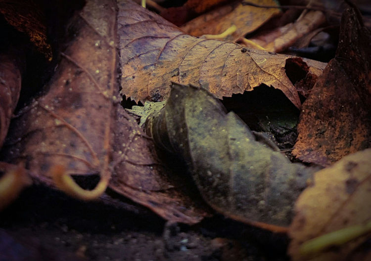 apparently autumn... Leaf Autumn Close-up Nature Change Outdoors Day Beauty In Nature The Great Outdoors - 2016 EyeEm Awards The Week Of Eyeem Nature_collection Countryside Non-urban Scene Autumn 2016 Low Angle Nature Tranquility