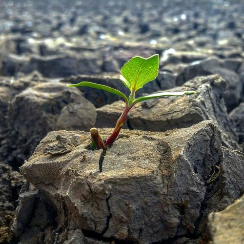 Resilience  Oregon Life Plant Nature