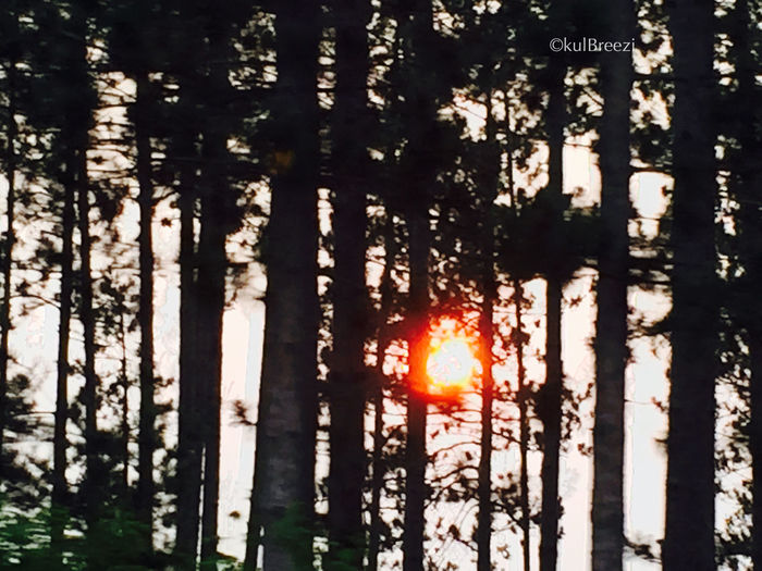 TangerineBetween Drive By Photography Black And White Orange Sunset Sun Behind Trees Sunset StreamzooVille Sunset EyeEm Nature Lover