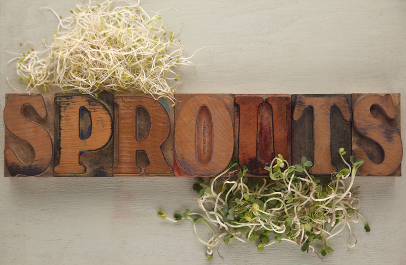 Alfalfa and daikon sprouts with the word in old wood type Alfalfa Sprouts Arrangement Close-up Daikon Sprouts Font Food Freshness Green Healthy Eating Letters No People Overhead Plant Sprouts Type Typeface  Typography Wood - Material Wood Type Word