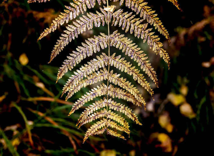 Close-up of fern leaves against blurred background