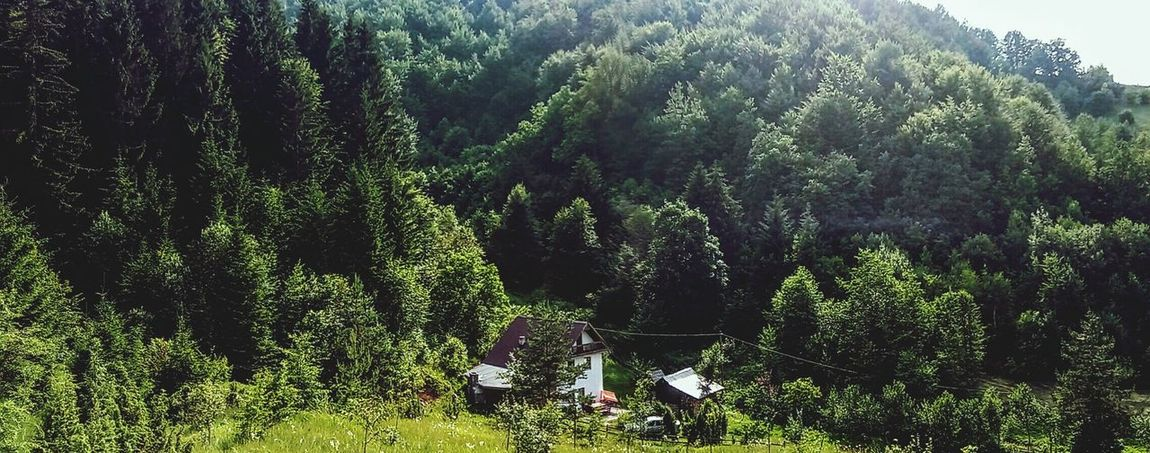 Nature Tree Beauty In Nature Sky Plant No People Green Color Day Beauty Lovephotography  View Lovephotography  Destination Adventure Photooftheday Weekendhouse Bosnia And Herzegovina Beautiful Tree Nature Mountain Ontheway Travel Photography Treskavica