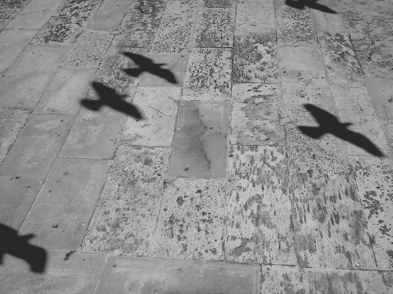 Shadow of birds flying on stone floor