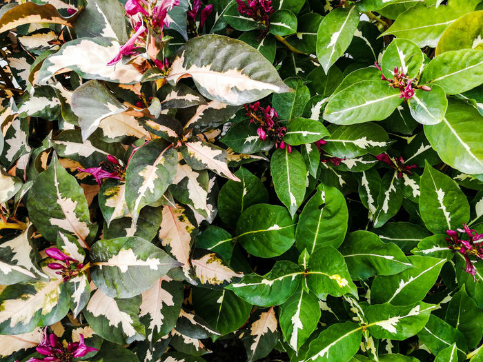 two tone leafs