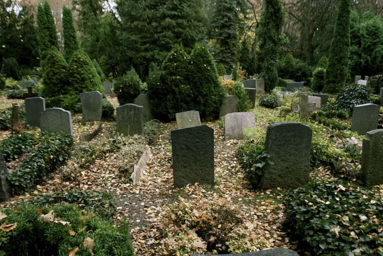Plants And Tombstones At Cemetery