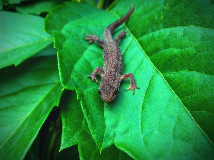 Nature Naturelovers Life Green Animal Lizard