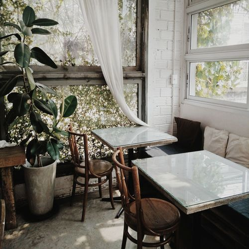 cafe #café Local Culture Coffee Shop Local People Flower Curtain Chair Home Interior Window Table Living Room Houseplant Plant Bonsai Tree In Bloom