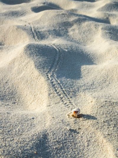 High angle view of lizard on sand at beach
