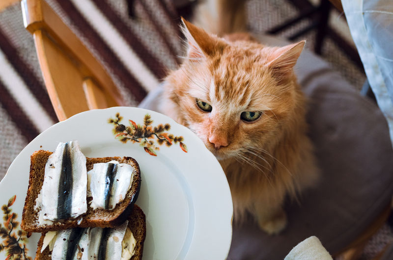 Close-up of cat with food in plate