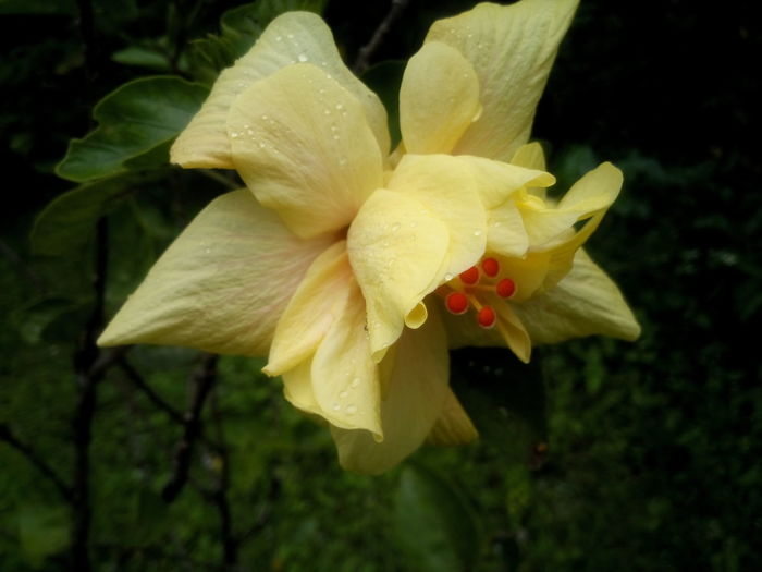 Hibiscus First Eyeem Photo